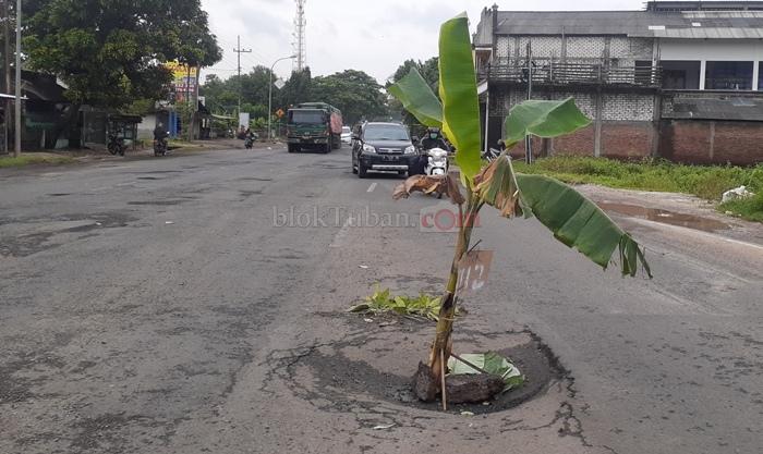 Sering Picu Kecelakaan, Jalan Berlubang Kembali di Tanami Pohon Pisang