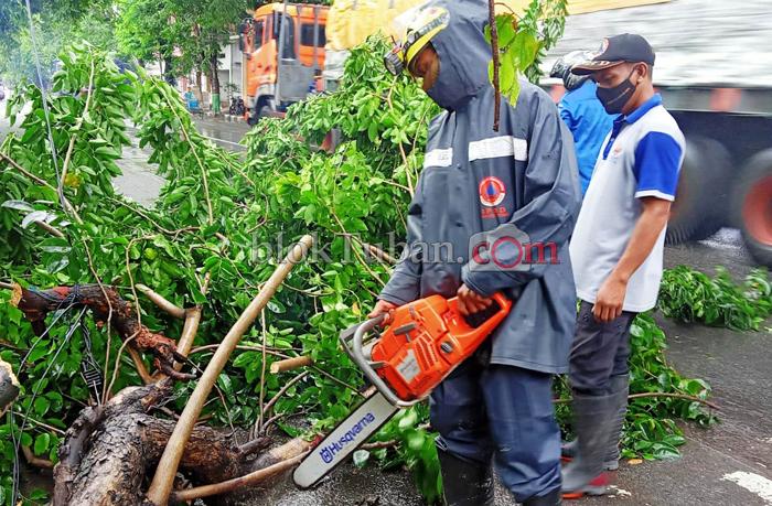 Diterjang Hujan Lebat, Pohon di Jalan Panglima Sudirman Tuban Tumbang